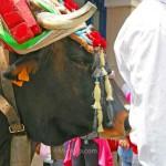 Ox-at-San-Isidro