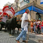 Oxen-with-driver-Nerja