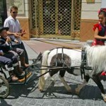 Pony-and-cart-San-Isidro