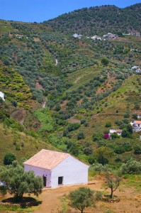 Picture of Cortijo in Frigiliana