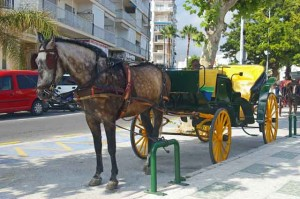 Horse and Carriage trip in Nerja
