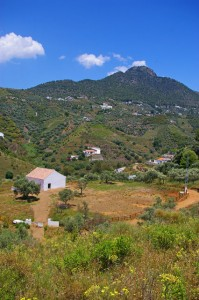 Picture of  in Frigiliana