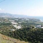 Girasoles View
