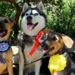 Riogordo Country Feria – Best Rescue Dog & Waggiest Tail