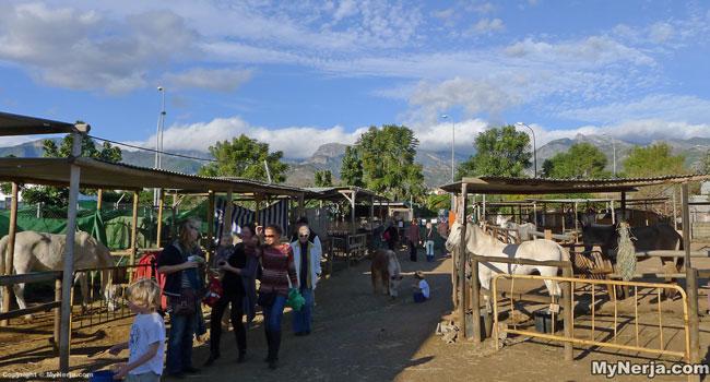 Nerja Donkey Sanctuary Announces Its Closure