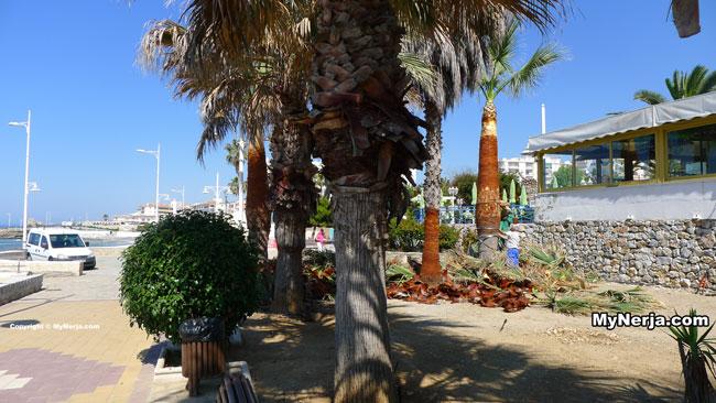 Palms Torrecilla
