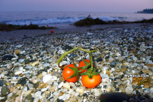 (English) Tomatoes Galore At Burriana Beach Nerja
