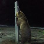 Circus Bear Showers On El Playazo Beach