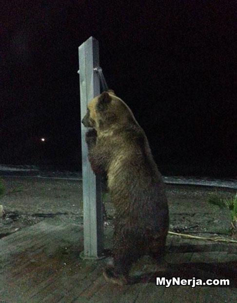 Circus Bear Beach