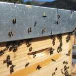 Bee Hives Available To Rent