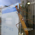 Praying Mantis Looks For New Home