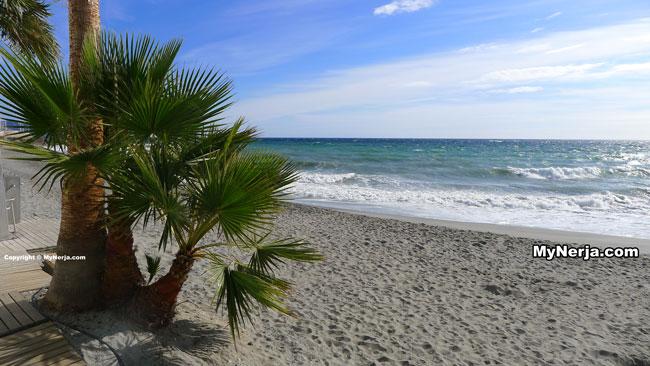Torrecilla Palms