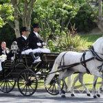horses-cars