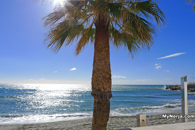 Palm Tree At Torrecilla Beach Nerja