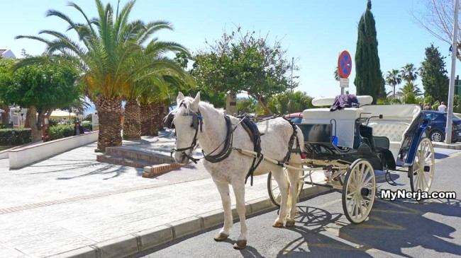 Horse and carriage Nerja