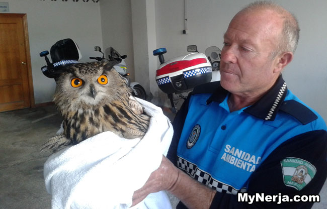 Nerja Owl Rescued