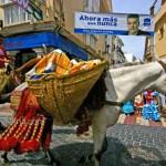 Colourful-Donkey-San-Isidro