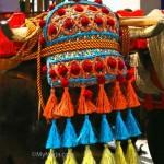 Ox-with-coloured-headdress
