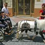 Pony-and-cart-San-Isidro
