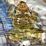 Nerja-Amphibians