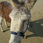 Nerja Donkey Sanctuary