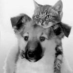 <!--:en-->SPA Animal Charity Nerja<!--:-->