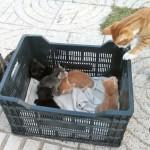 <!--:en-->Box Of Kittens At El Salon Beach<!--:-->